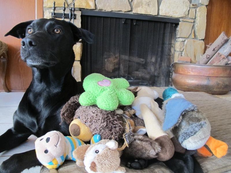 HOMEMADE DOG FOOD // Hourglass & Bloom Blog